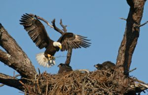 Teaching Eagles to Fly