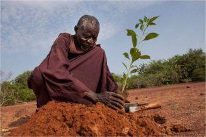 Yacouba Sawadogo : Menghijaukan Gurun Gersang